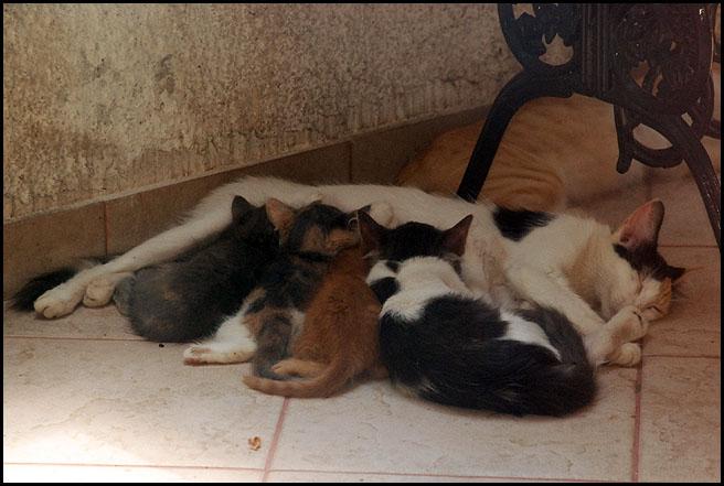 3 μωρά νιαουριστά ψάχνουν...  - Σελίδα 3 DSC_3848