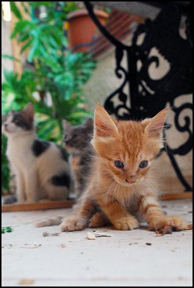 3 μωρά νιαουριστά ψάχνουν...  - Σελίδα 3 DSC_5262