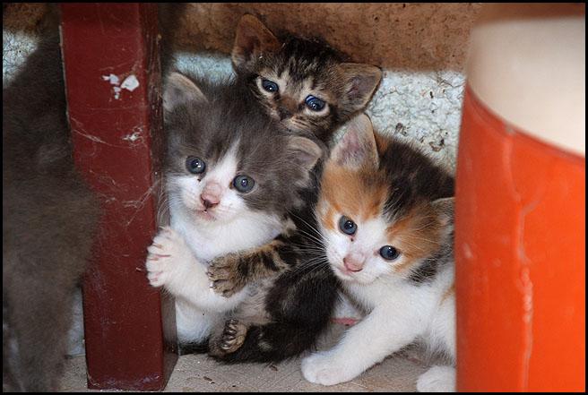 Ιστορίες της αυλής.. ( ή αλλιώς: ιστορίες με γάτες ) DSC_6304