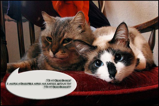 """Οι """"μαύρες"""" σκέψεις μιας γάτας... Μήπως η γάτα έχει κάτι να μας πει; - Σελίδα 2 DSC_6465"""