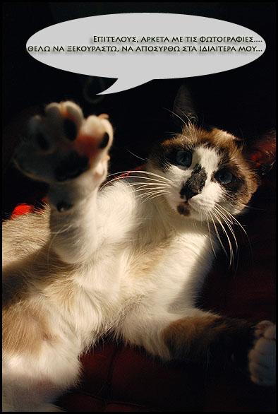 """Οι """"μαύρες"""" σκέψεις μιας γάτας... Μήπως η γάτα έχει κάτι να μας πει; - Σελίδα 2 DSC_6484"""