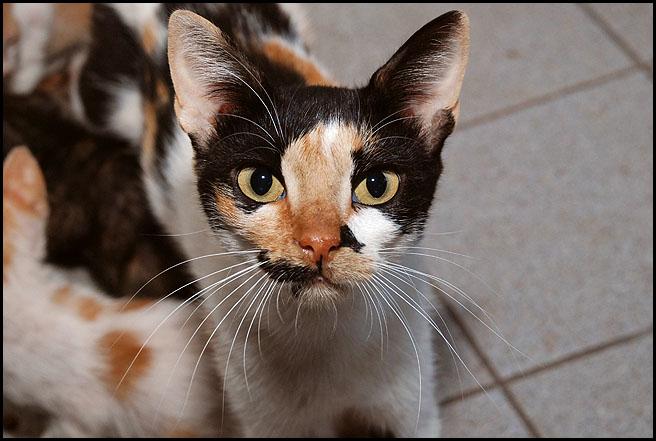 Ιστορίες της αυλής.. ( ή αλλιώς: ιστορίες με γάτες ) DSC_8264