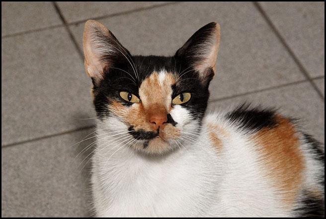 Ιστορίες της αυλής.. ( ή αλλιώς: ιστορίες με γάτες ) DSC_8286