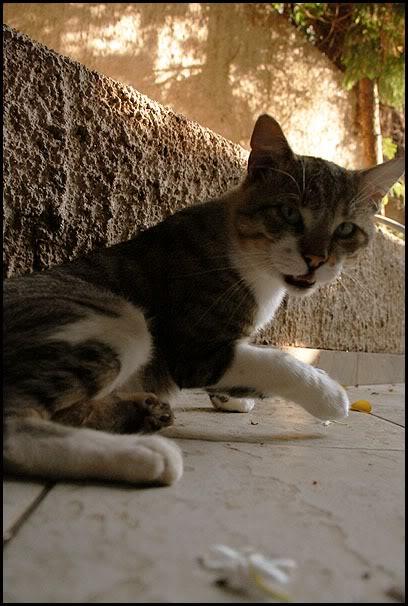 Ιστορίες της αυλής.. ( ή αλλιώς: ιστορίες με γάτες ) DSC_8736