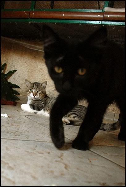 Ιστορίες της αυλής.. ( ή αλλιώς: ιστορίες με γάτες ) DSC_8750