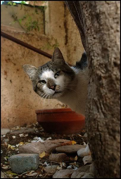 Ιστορίες της αυλής.. ( ή αλλιώς: ιστορίες με γάτες ) DSC_8815