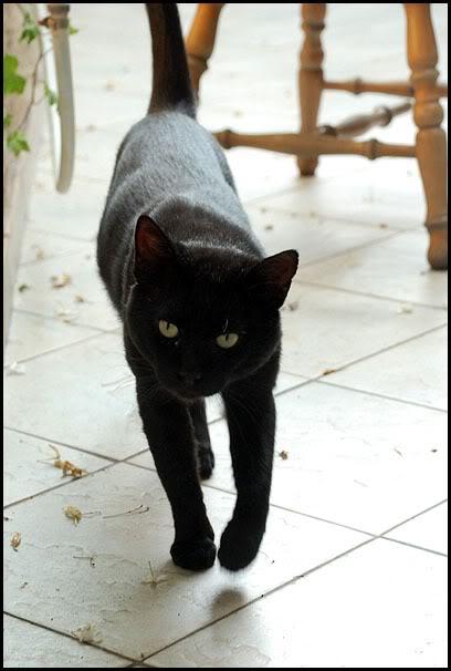 Ιστορίες της αυλής.. ( ή αλλιώς: ιστορίες με γάτες ) DSC_8823