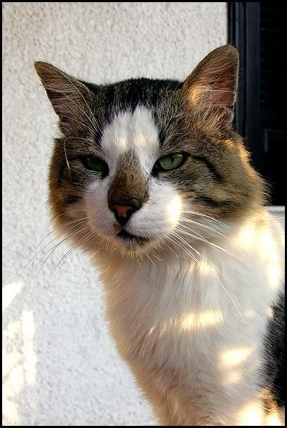 Ιστορίες της αυλής.. ( ή αλλιώς: ιστορίες με γάτες ) Picllo