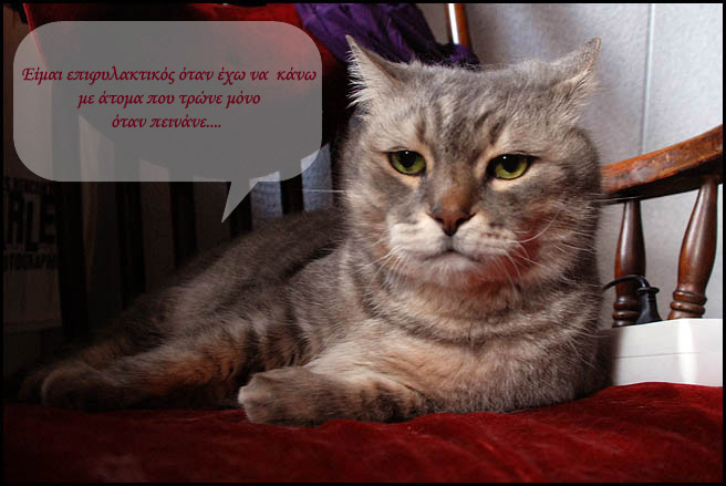 """Οι """"μαύρες"""" σκέψεις μιας γάτας... Μήπως η γάτα έχει κάτι να μας πει; - Σελίδα 3 Gggggggg"""