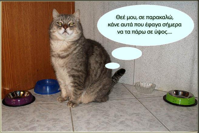 """Οι """"μαύρες"""" σκέψεις μιας γάτας... Μήπως η γάτα έχει κάτι να μας πει; - Σελίδα 3 Ggggggggggg-1"""