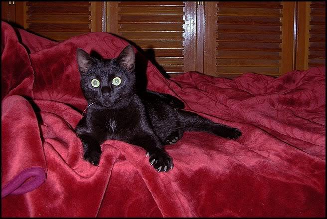 Ιστορίες της αυλής.. ( ή αλλιώς: ιστορίες με γάτες ) Ksir027