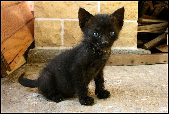 Ιστορίες της αυλής.. ( ή αλλιώς: ιστορίες με γάτες ) Qaw002