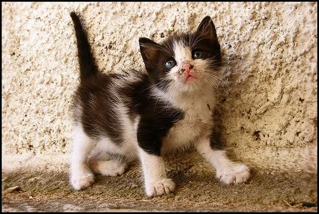 Ιστορίες της αυλής.. ( ή αλλιώς: ιστορίες με γάτες ) Qaw006