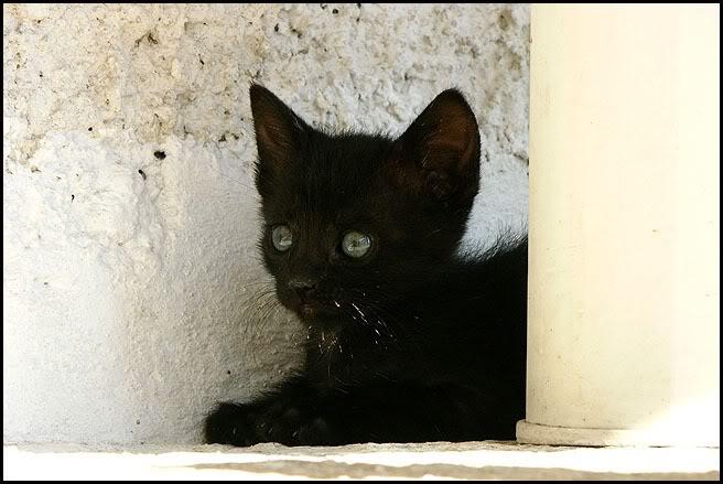 Ιστορίες της αυλής.. ( ή αλλιώς: ιστορίες με γάτες ) Qaw126