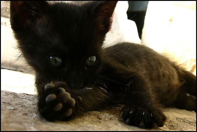 Ιστορίες της αυλής.. ( ή αλλιώς: ιστορίες με γάτες ) Qaw128