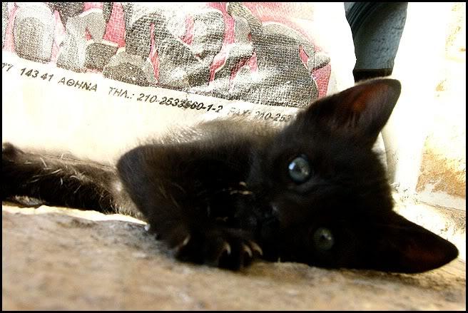 Ιστορίες της αυλής.. ( ή αλλιώς: ιστορίες με γάτες ) Qaw130