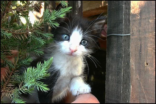 Ιστορίες της αυλής.. ( ή αλλιώς: ιστορίες με γάτες ) Qaw139