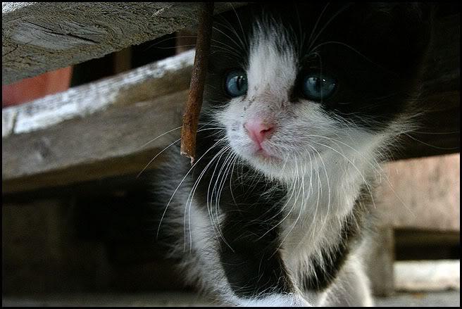 Ιστορίες της αυλής.. ( ή αλλιώς: ιστορίες με γάτες ) Qaw147