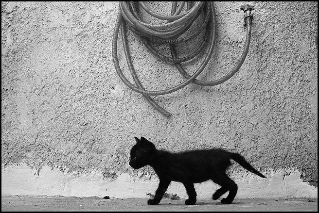 Ιστορίες της αυλής.. ( ή αλλιώς: ιστορίες με γάτες ) Qaw153