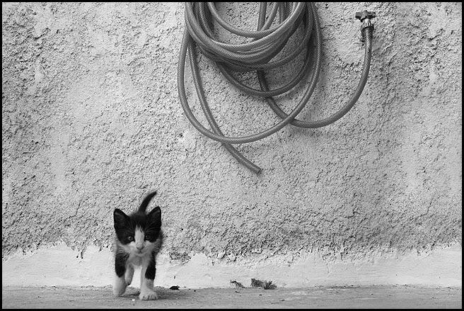 Ιστορίες της αυλής.. ( ή αλλιώς: ιστορίες με γάτες ) Qaw154