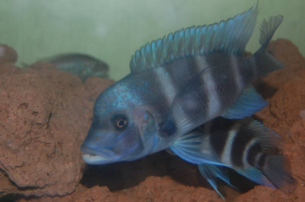 Colaborem: Fotos de Peixes e Plantas Aquáticas 0f828ec8