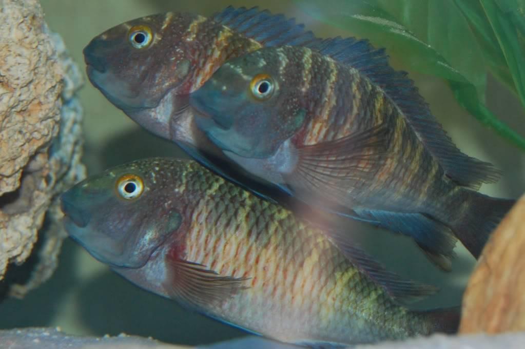 Colaborem: Fotos de Peixes e Plantas Aquáticas A6da6e78