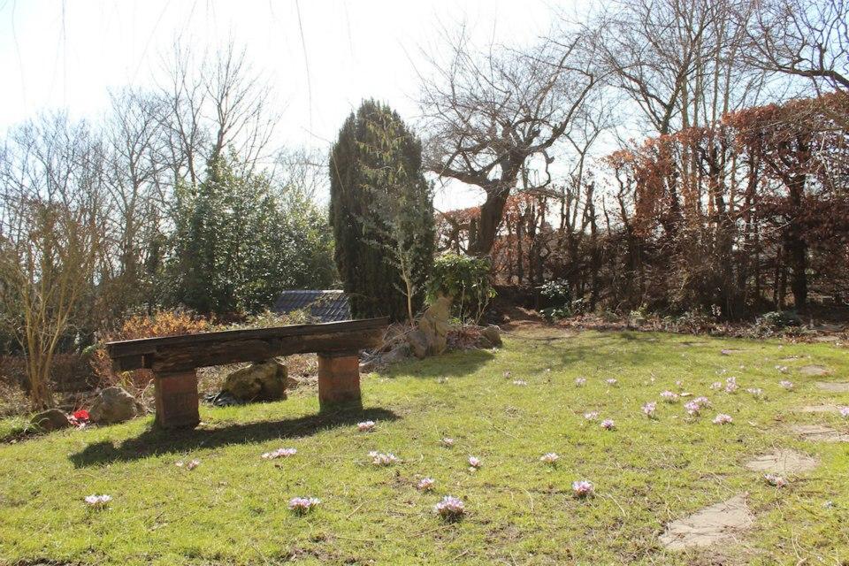 Le jardin de Laurent - Page 5 601281_10200134007925752_548419054_n