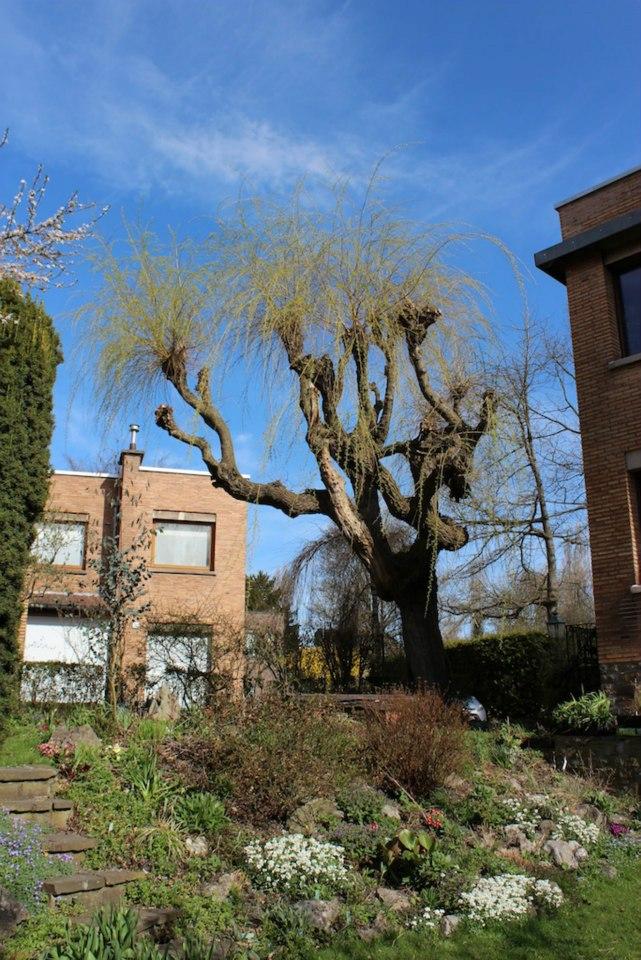 Le jardin de Laurent - Page 5 246632_10200416588870099_632748566_n