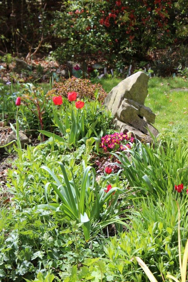 Le jardin de Laurent - Page 5 321316_10200422953909221_1897424755_n