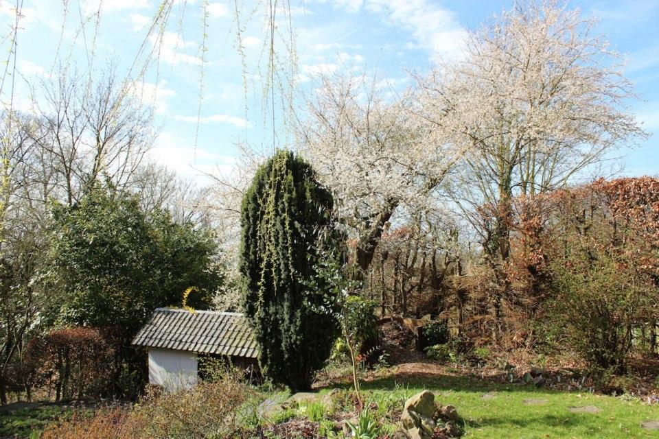 Le jardin de Laurent - Page 5 64491_10200353417970866_1404969305_n