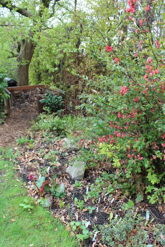 Le jardin de Laurent - Page 5 936350_10200422914828244_1956499536_n