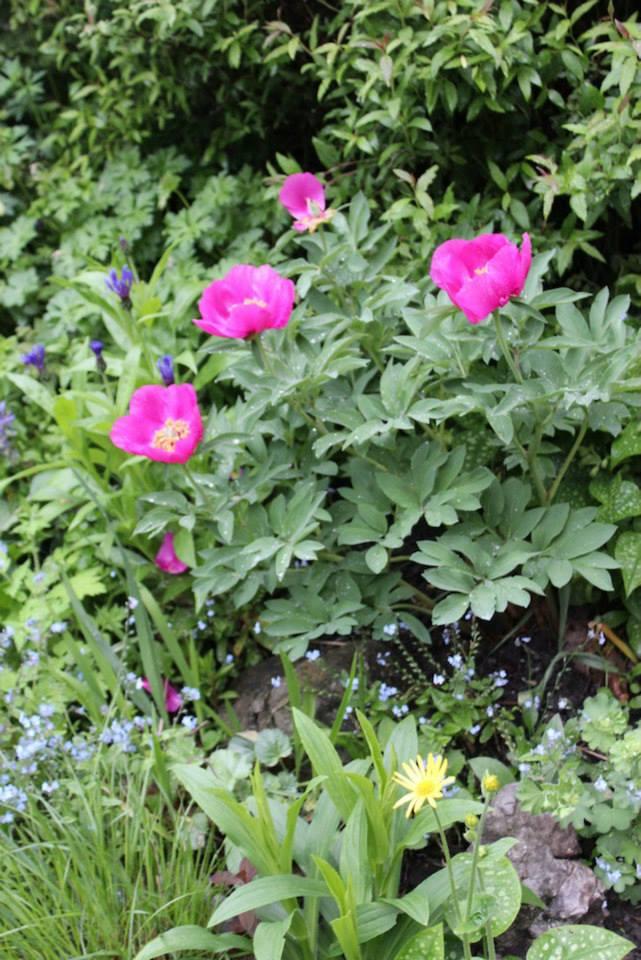 Le jardin de Laurent - Page 5 217321_10200494634061180_543514256_n
