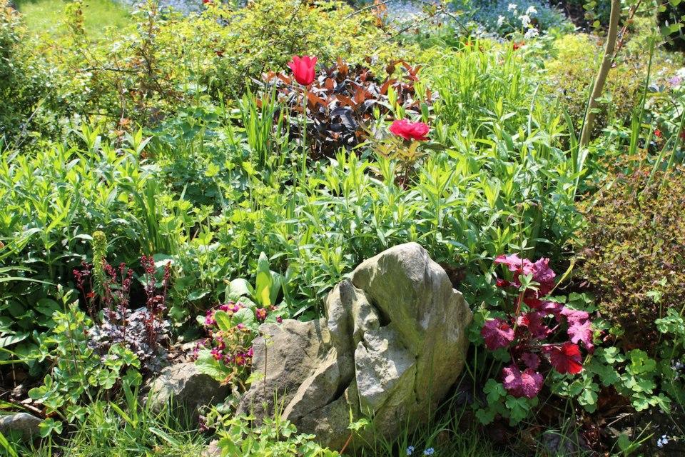 Le jardin de Laurent - Page 5 481003_10200452194400215_1581616208_n