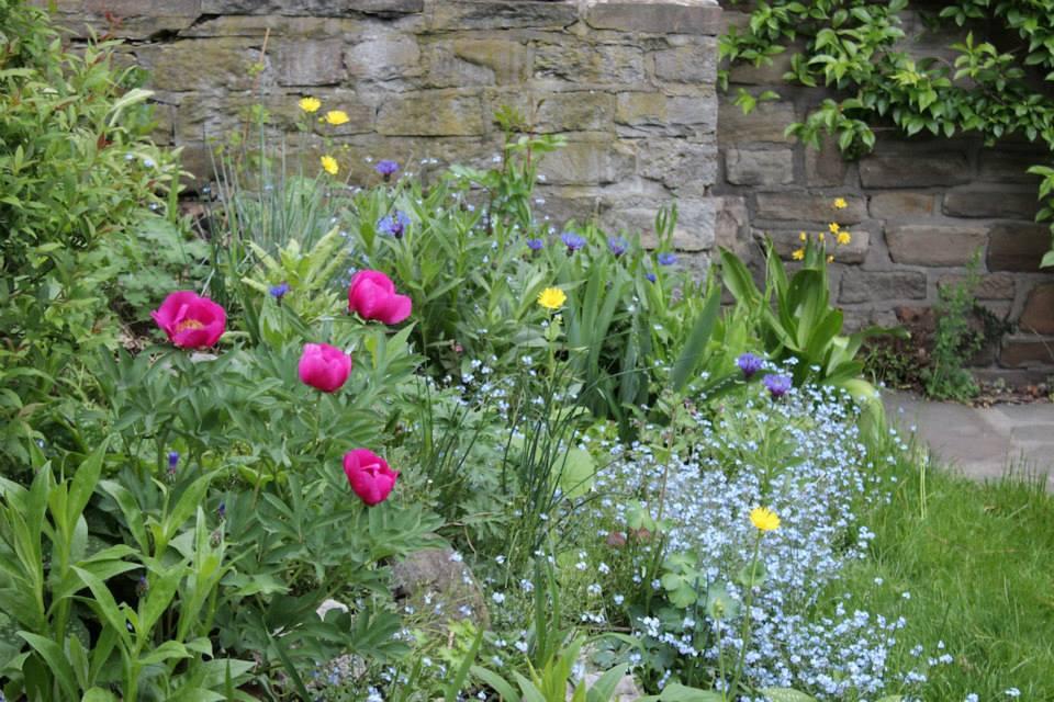 Le jardin de Laurent - Page 5 599511_10200484603930433_99255529_n