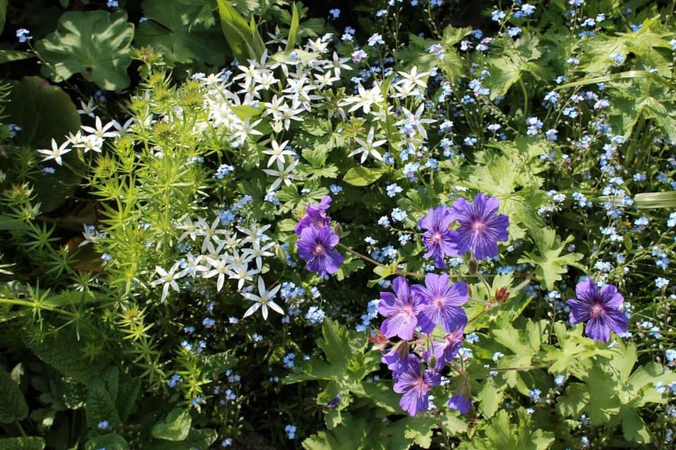 Le jardin de Laurent - Page 5 601056_10200593112083069_655543111_n