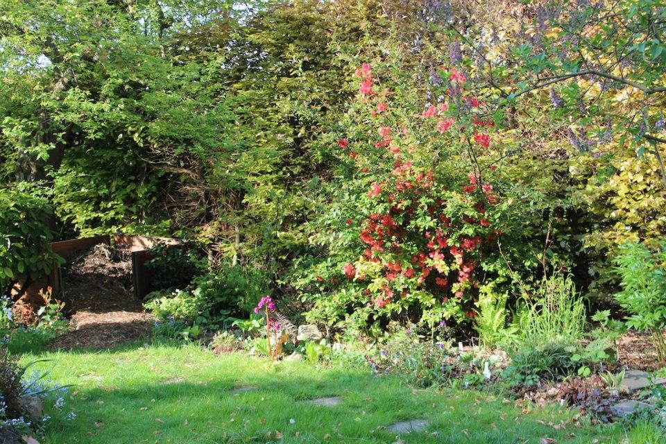 Le jardin de Laurent - Page 5 601825_10200452182959929_698950447_n