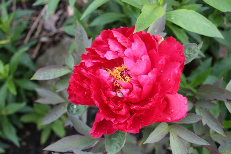 Le jardin de Laurent - Page 5 969716_10200471854811713_232520566_n