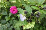 Le jardin de Laurent - Page 4 Th_308880_4350808321199_1410152442_n