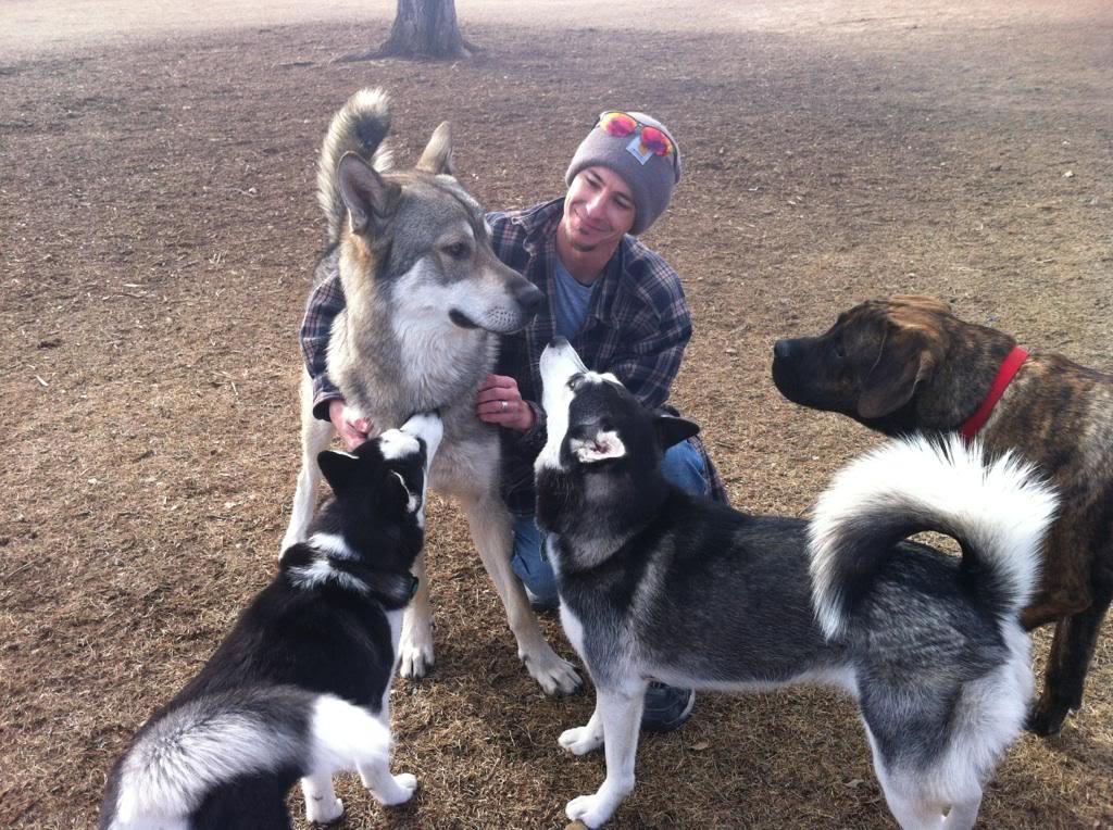 Wolf Husky Pups - Page 2 IMG957853