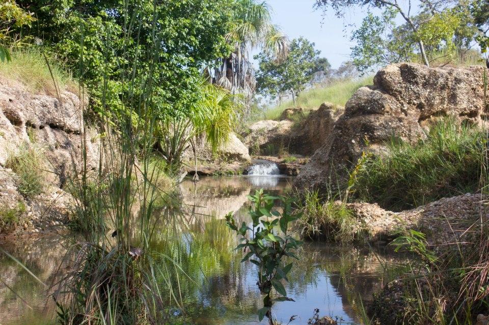Reseña / Parque Nacional Aguaro Guariquito 1 de Septiembre 552118_512301262128868_594123849_n