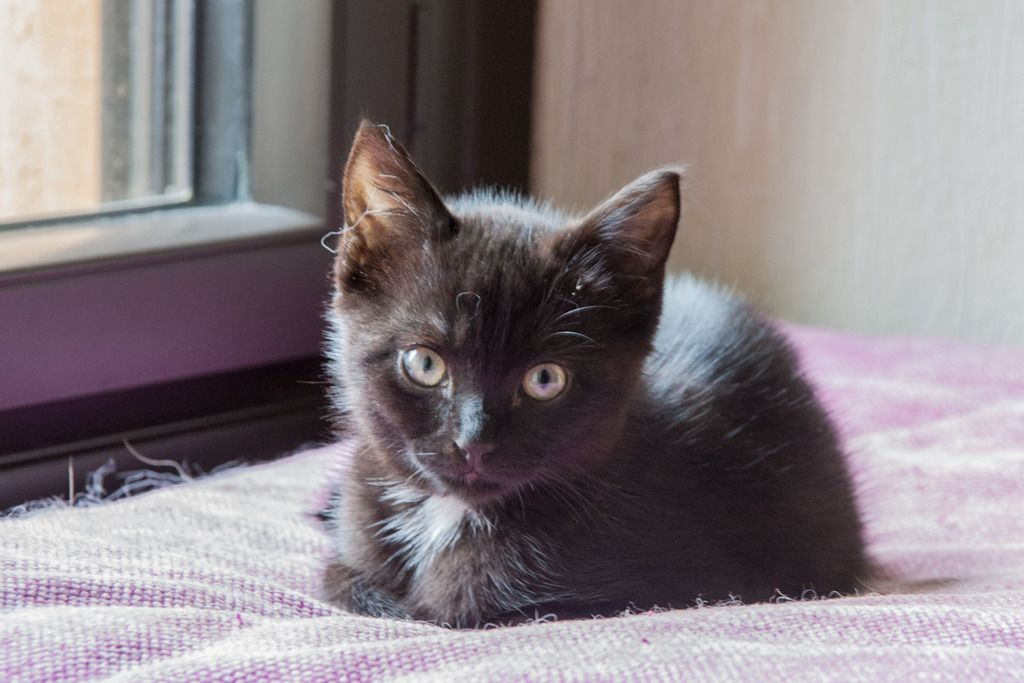 Maëlig, femelle européenne noire estimée née 19/04/2016 - Page 3 Maeumllig-2_zpsoksitgzg