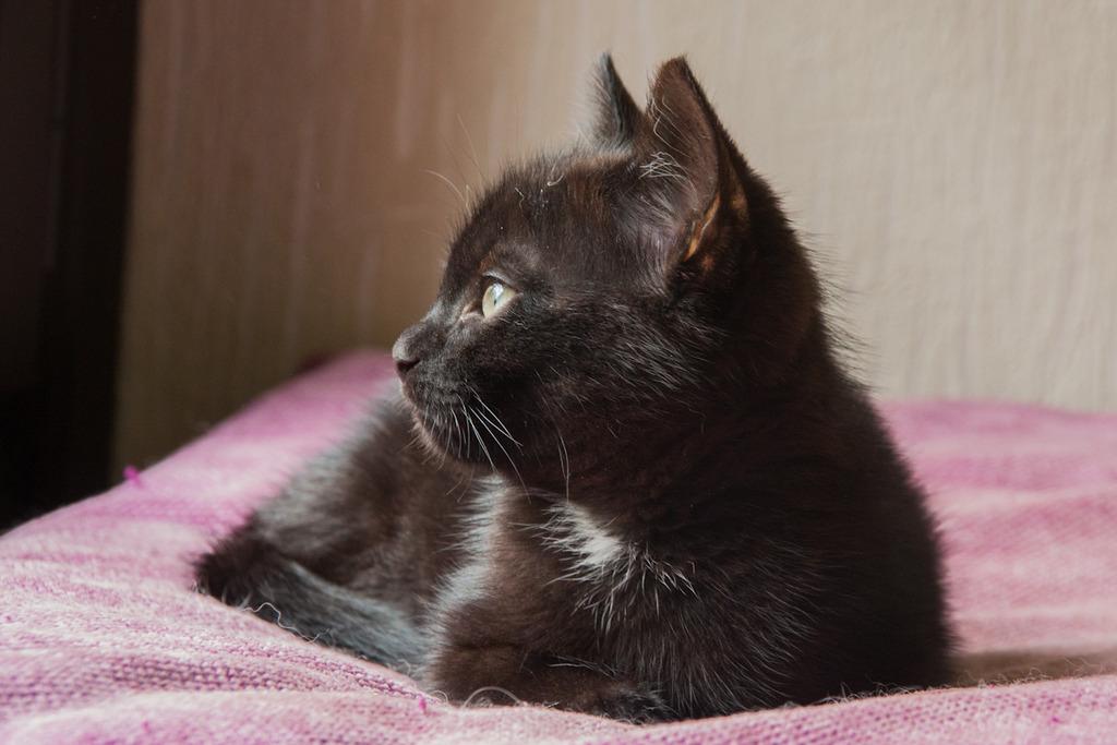 Maëlig, femelle européenne noire estimée née 19/04/2016 - Page 3 Maeumllig-3_zpsbgspjoiw