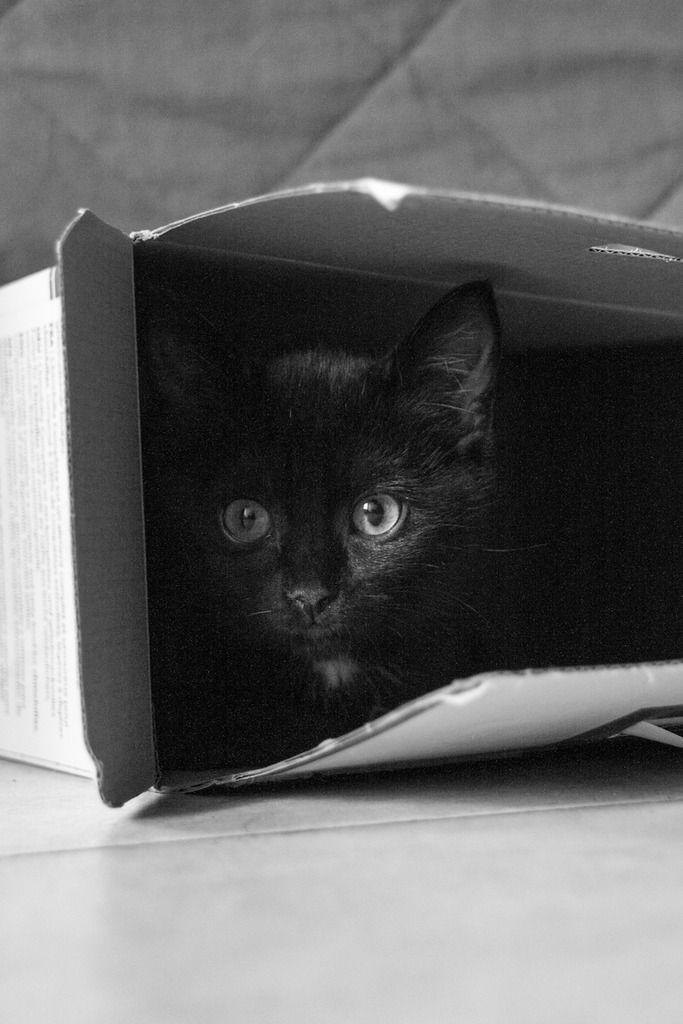 Maëlig, femelle européenne noire estimée née 19/04/2016 - Page 4 Maeumllig-3_zpstrutc2bw