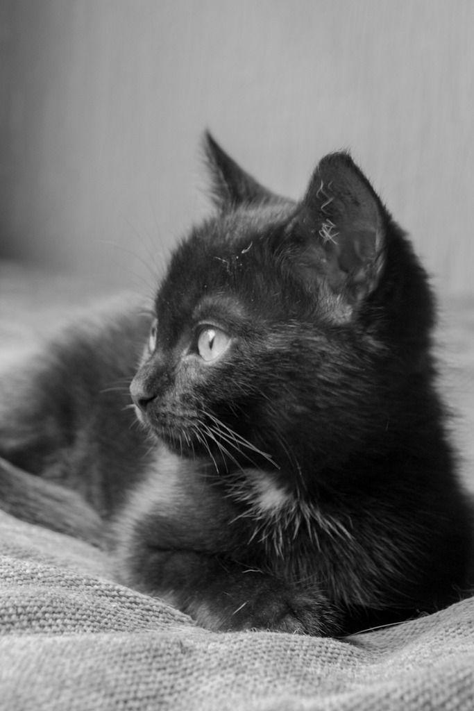 Maëlig, femelle européenne noire estimée née 19/04/2016 - Page 3 Maeumllig-5_zpswye24gax