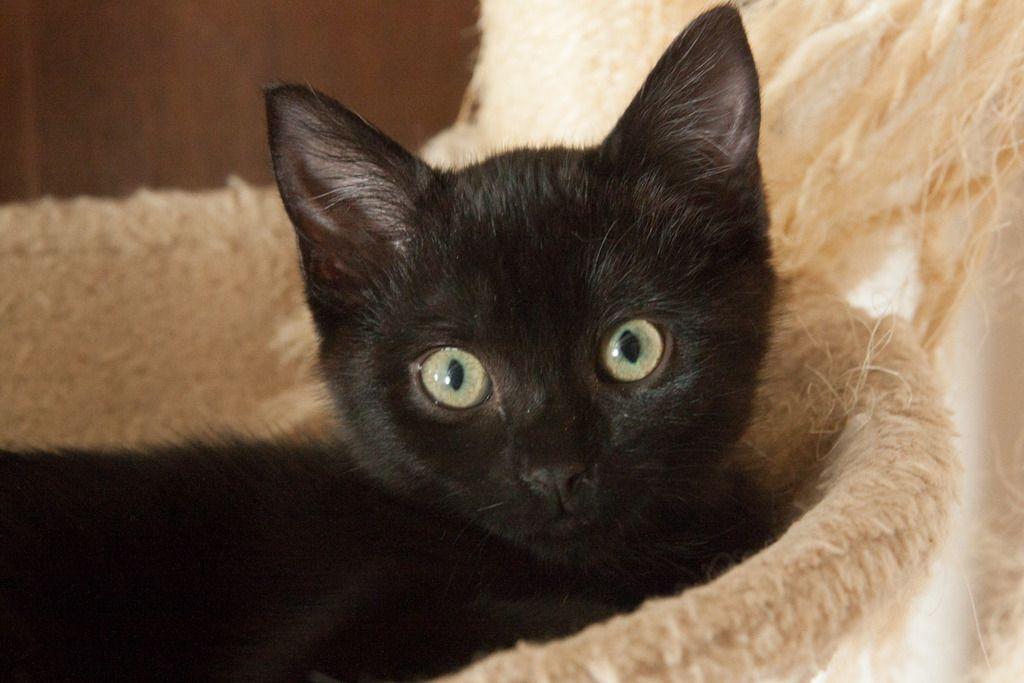 Maëlig, femelle européenne noire estimée née 19/04/2016 - Page 4 Maeumllig-7_zpsjpknhwag