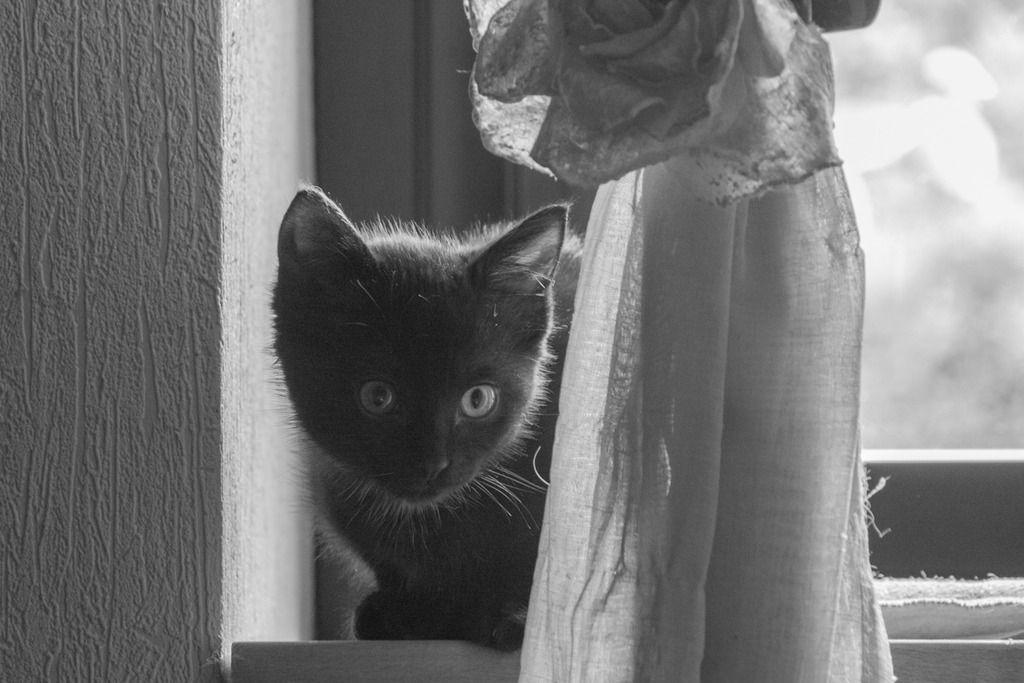 Maëlig, femelle européenne noire estimée née 19/04/2016 - Page 3 Maeumllig_zpsipmfk3nh