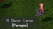Ciaturas paragon Paragon1
