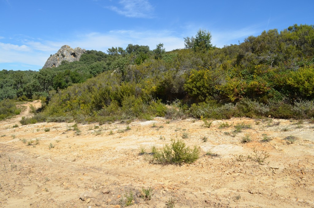 Drosophyllum en Andalousie 17droso_zpsoc0cenu8