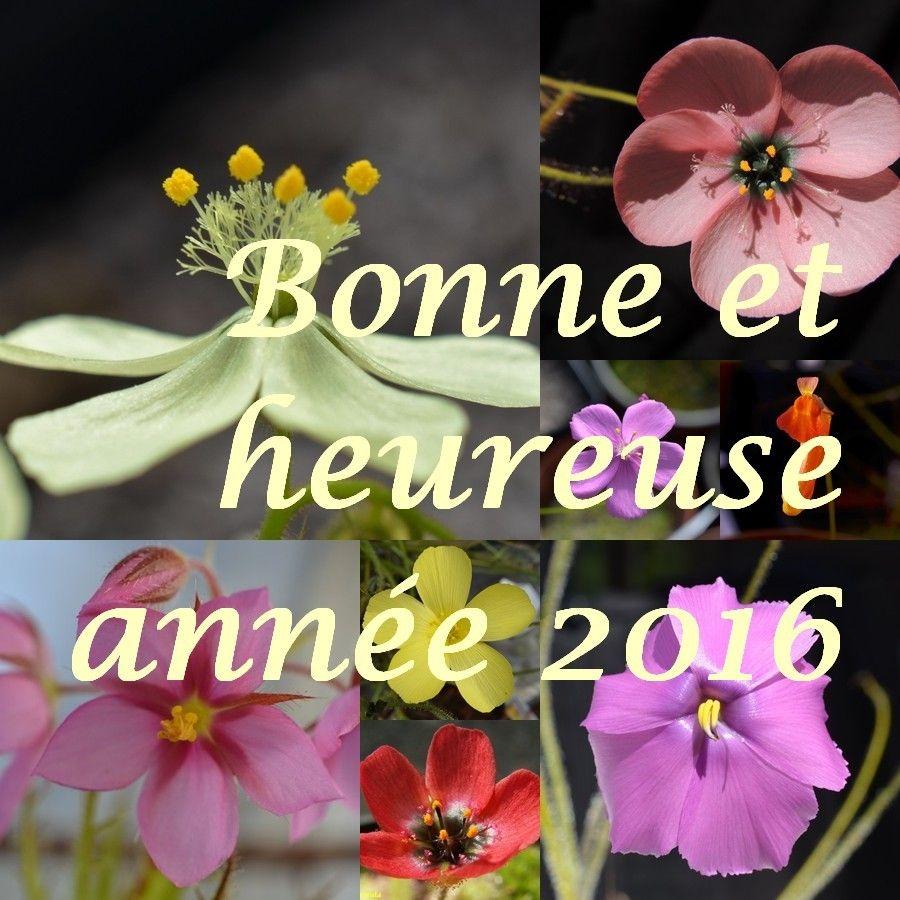 Bonne Année 2016  Fleurs_zpsa4tidbtn