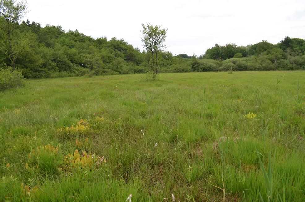 Visite de quelques sites de Sarracenia Sarra12_zps2paskfkc